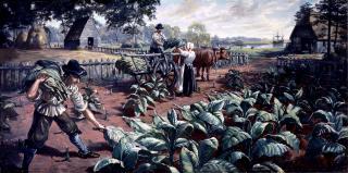 Jamestown setters tobacco image