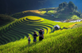Terraced-rice-fields-28__880